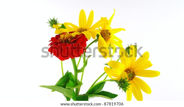 blossom-flowers-over-white-600w-87819706