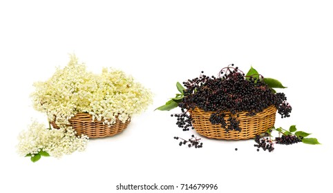 Blossom and fruit black elderberry (Sambucus nigra) in the baskets on a white background. Common names: elder, black elder, European elder and European black elderberry.