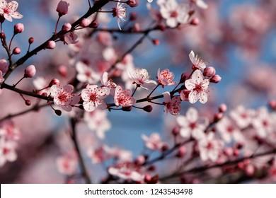 blossom fruit, spring