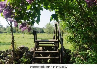 Blossom lilacs by a wooden stile crossing a dry stone wall in a rural landscape by springtime at the swedish island Oland