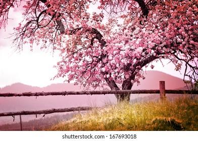 Blossom-Baum auf Naturhintergrund / Frühlingsblumen / Frühlingshintergrund