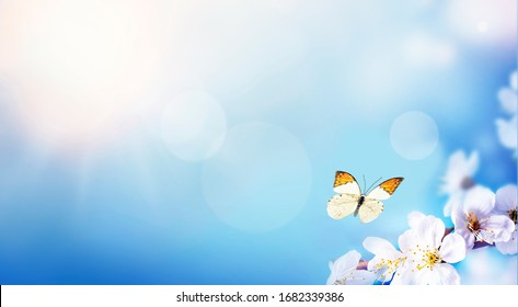 Blossom tree over nature background and butterfly. Spring flowers. Spring Background.