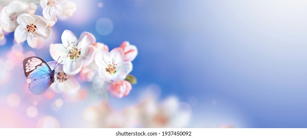 Blossom tree over nature background with butterfly. Spring flowers. Spring background. Blurred concept. - Shutterstock ID 1937450092