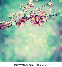 Blossom tree over nature background/ Spring flowers/ Spring Background