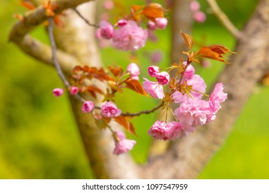 Blossom of the tree as the sign of spring time. Selective focus. Soft focus spring background.