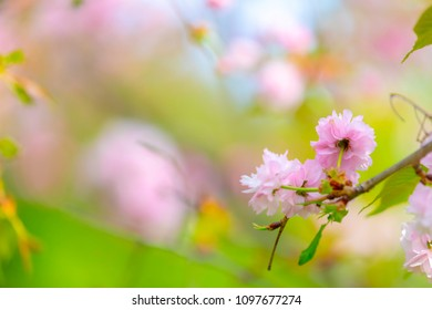 Blossom of the tree as the sign of spring time. Selective focus. Soft focus spring background. Focus on flower