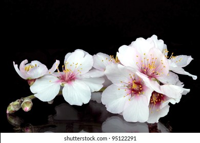 Blossoming almond flower
