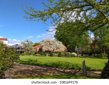 Blossoming apple tree in front of a farmhouse with a thatched roof in Nienburg on the river Weser