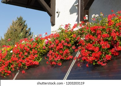 Blossoming balcony with red flowers
