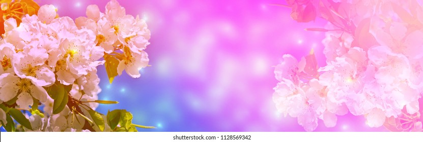 Blossoming branch cherry. Bright colorful spring flowers