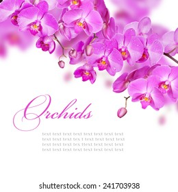 Blossoming branches of purple orchids on a white background