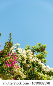 Blossoming bushes against blue sky