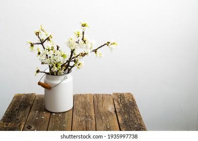 blühender Kirschblütenzweig auf Milchkanister, alter, verwitterter Holztisch, weißer Hintergrund