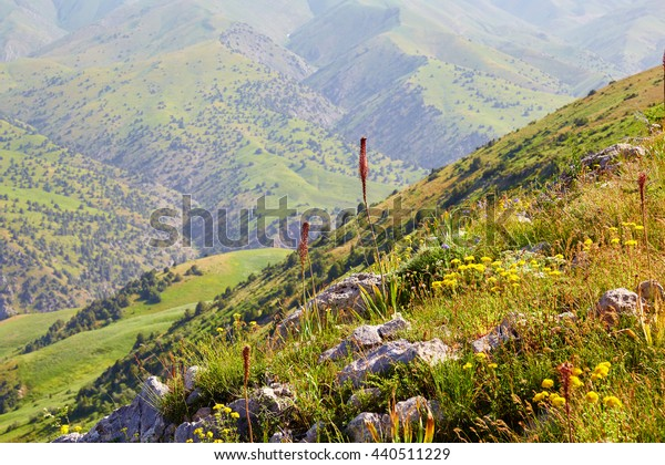 blossoming of field herbs in the summer in the mountain gorge