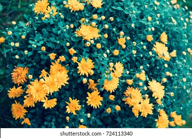 Blossoming flowers in a garden