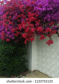 Blossoming garden with beautiful colorful flowers near the house