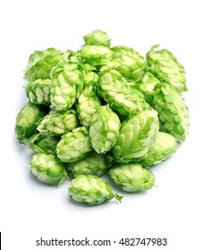 Blossoming hop on a white background