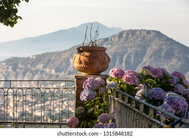 Blossoming hydrangea with the Sorrento and Vesuvius in the background