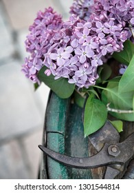 Blossoming lilac flowers with old iron garden scissors on wooden background.
