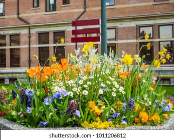 Blossoming spring flowers on a flowerbed in front of a building