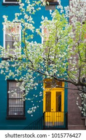 Blossoming tree near an old apartment building, Manhattan, New York City