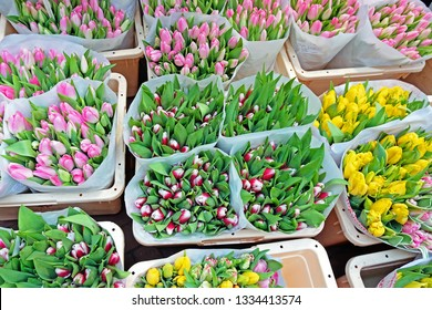 Blossoming tulips for sale in Amsterdam the Netherlands