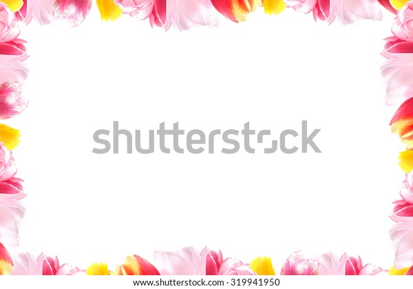 Blossoming tulips vignette over white background with space for text