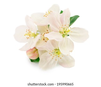 blossoms isolated on white background