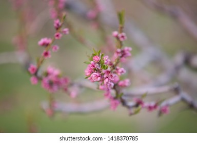blossoms on a fruit trees