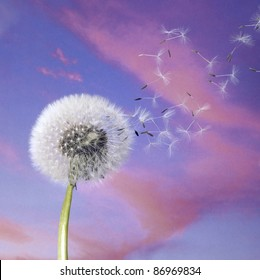 blow ball and flying seeds in colorful back