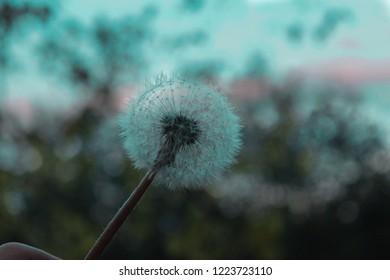Blowball Blue background