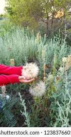 Blowball grass hiking