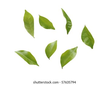 blowing leaves isolated on white background