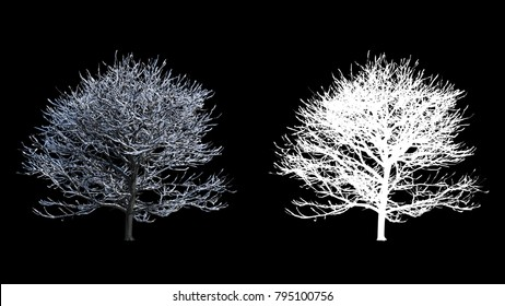 Blowing on the wind beautiful full size winter trees with snow, alpha isolated with black and white luminance matte, perfect for digital composition