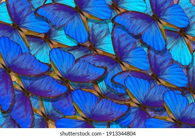 Blue abstract texture background. Butterfly Morpho. Wings of a butterfly Morpho. Flight of bright blue butterflies