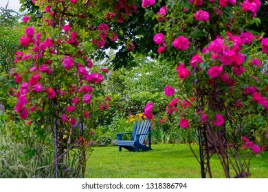 Blue Adirondack chair in the backyard garden, framed by a rose arbor.
