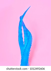 Blue aloe vera on pink paper background. Trendy minimal pop art style and colors.