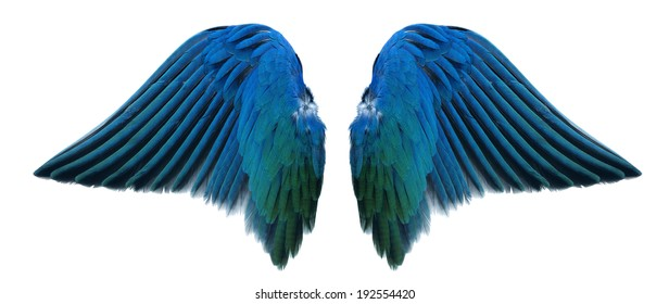 blue angel wing isolated