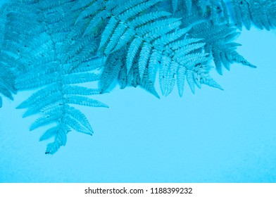 Blue autumn leaf fern on a soft blue background. Cold winter cozy concept.
