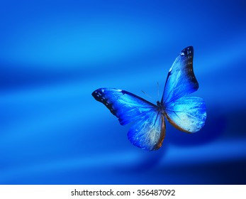 Blue background with butterfly