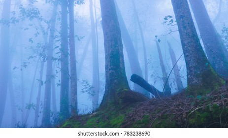 blue backgroung, Early morning in forest, fog, horror theme, halloween, dark, trees, silhouette, view, environment