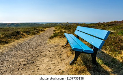 Blue bench in the dune landscape of northern Sylt, Germany