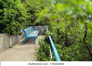 Blue bench for relaxing in the sun in the Park among the lush vegetation. Around green bushes and trees, a concrete wall - a cozy place. Straight linear perspective. The foreground in the blur. Russia