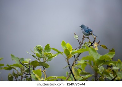 Blue bird on the tree