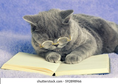 A Blue British Business Cat Is Wearing Glasses Reading Notebook Book