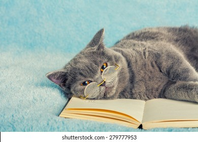 A Blue British Cat Is Wearing Glasses Lying And Sleeping On The Book