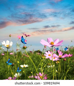 blue butterflies flying in cosmos flowers against a dusk sky