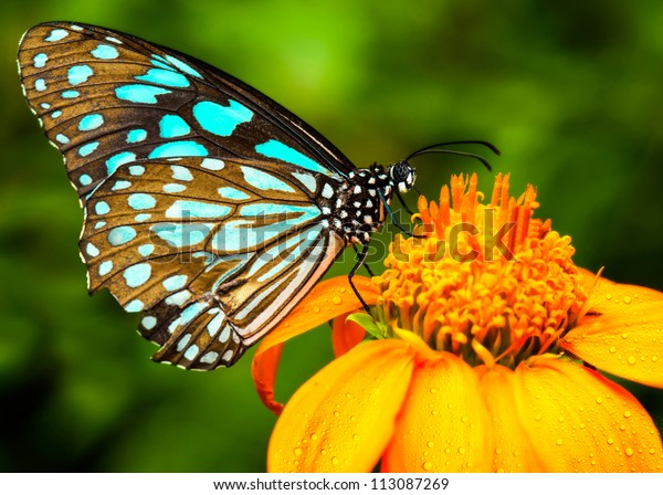 Blue butterfly fly in morning nature.