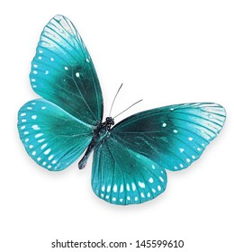 Blue butterfly flying