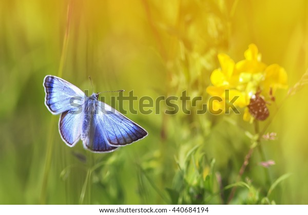 blue butterfly flying toward the flowers and the sun on a summer meadow